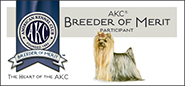 Yorkie Breeder Of Merit Banner